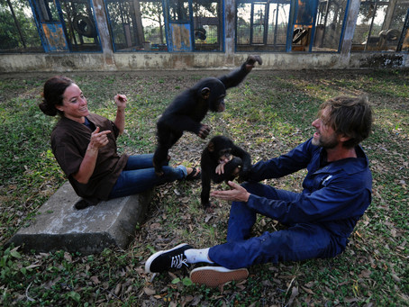 This power couple is raising over 60 Chimpanzees in Liberia. Read their story of kindness.