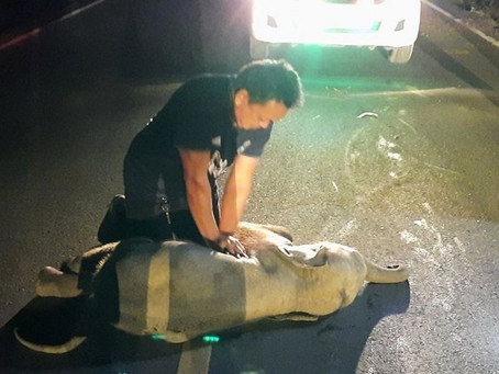 Man revives baby elephant with CPR after a motorcycle accident