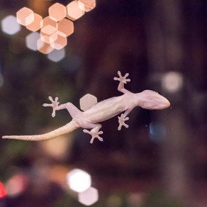 An Albino Lizard Kept Interrupting the Universe