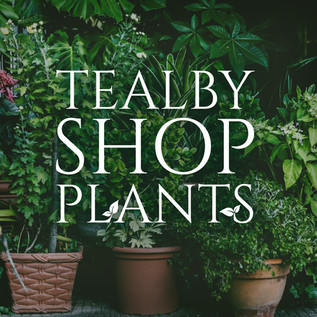 08/03/21 - Tealby Shop Plants & Compost NOW IN STOCK