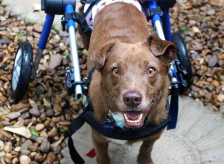 Quando e como usar a cadeira de rodas?