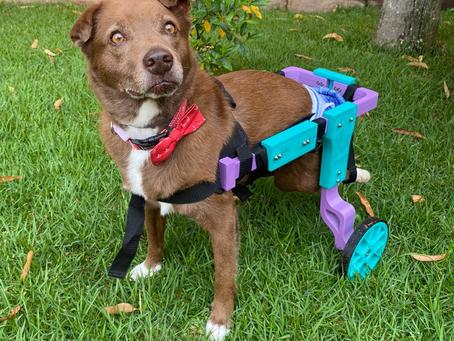 5 cuidados com a cadeira de rodas do seu pet especial
