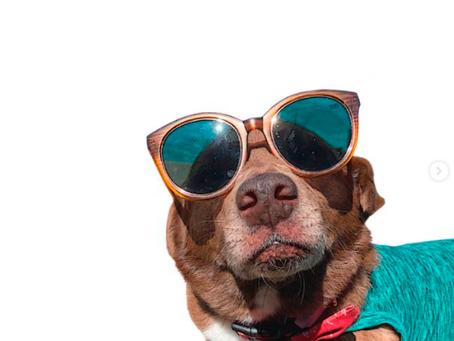Dicas de como Cuidar do seu Pet no Verão