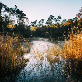 Naturpark-Pfyn-Finges.jpg