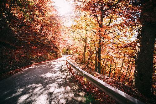 Autumnstreet