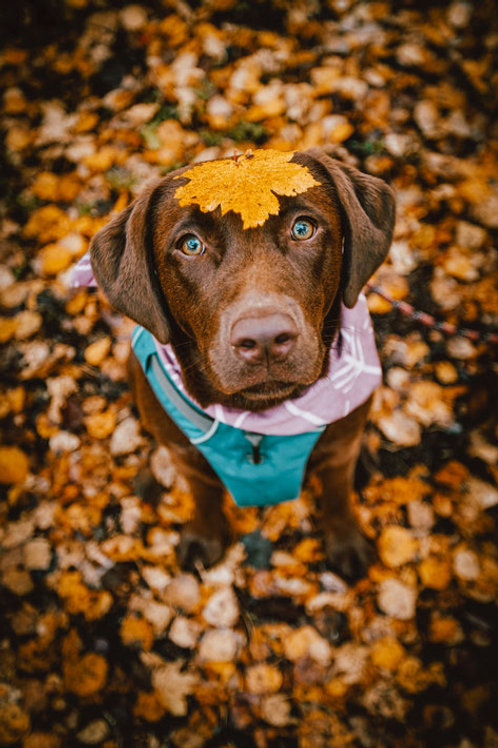 AutumnLAB