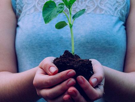 Explorando a sustentabilidade e responsabilidades