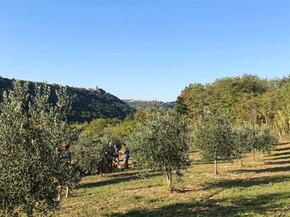 Ekološki oljčnik Aegida