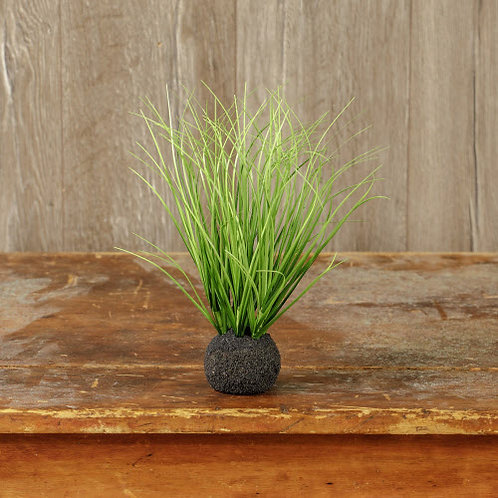 Grass Onion Bulb