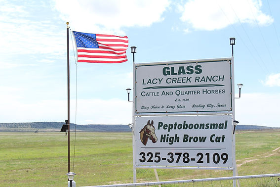 The Glass Ranch | Lacy Creek Quarter Horses | Peptoboonsmal, High Brow Cat