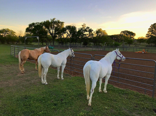 Corral Panels with Horses