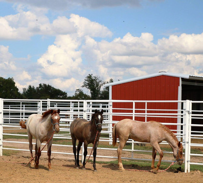 Corral Panels with Horse