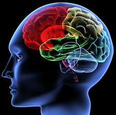 Neuropsicologia e as capacidades cognitivas de memória e atenção