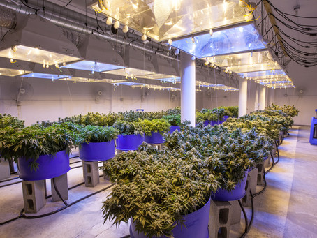 My Experience at a Cultivation Facility