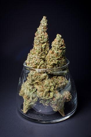 Durban Poison, a popular medical marijuana strain