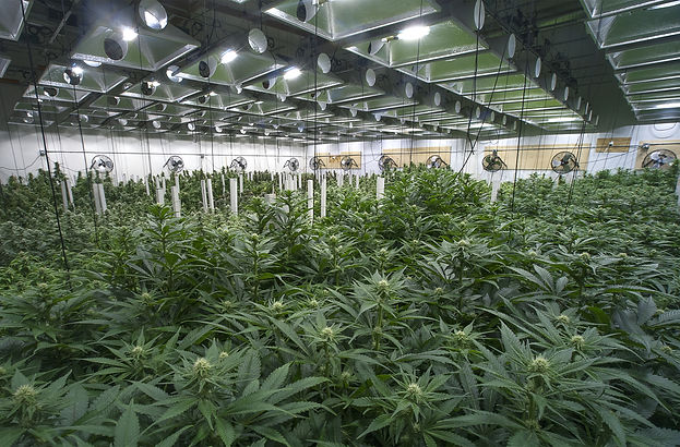 Indoor Cannabis cultivation facility