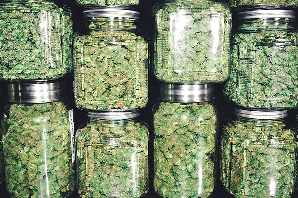 beautiful cannabis buds in jars