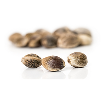 Medical Marjana Seeds in Missouri