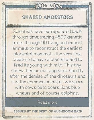 SHARED ANCESTORS.jpg
