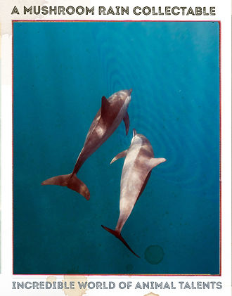 dolphinAfront[15627].jpg