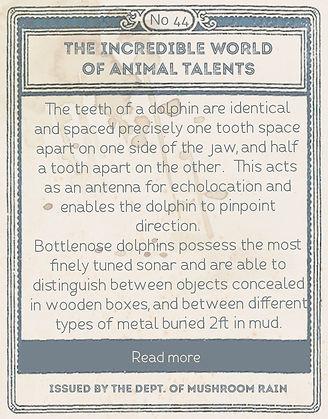 dolphinA back.jpg