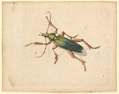 green-beetle-with-brown-legs-b7644f-1024