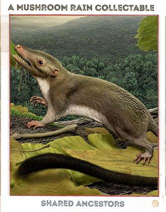 dolphin ancestor.jpg