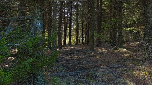 On-Black-Balsam-Trail-BRP-HDR_1200.preview.jpg
