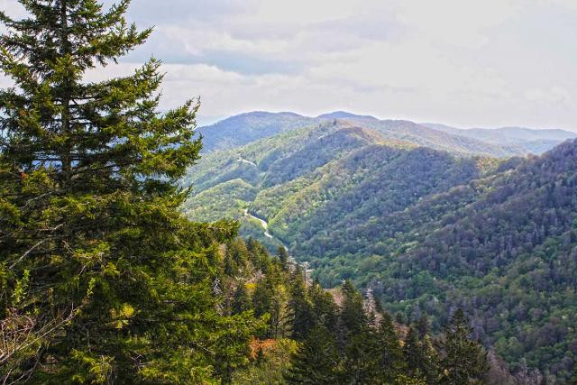 View-from-Black-Balsam-Trail-1200.preview.jpg