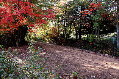 AutumnatDocs.jpg