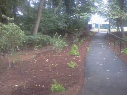 Trailhead plantings