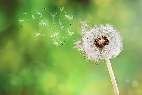 Allergie pollen.jpg