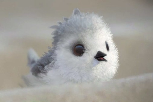 Piper as a hatchling