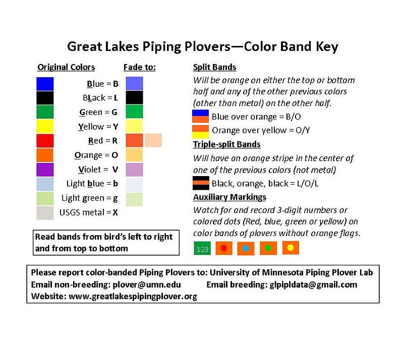 Piping Plover color-band key 2018 single