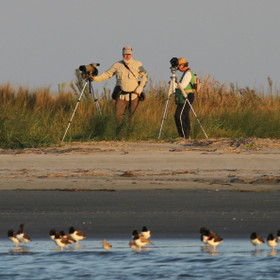 Pat and Doris Leary - Censusing Piping Ploversand other shorebirds since 1999.