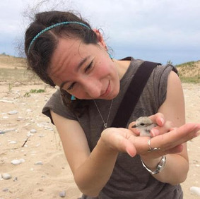Sarah Saunders with baby plover