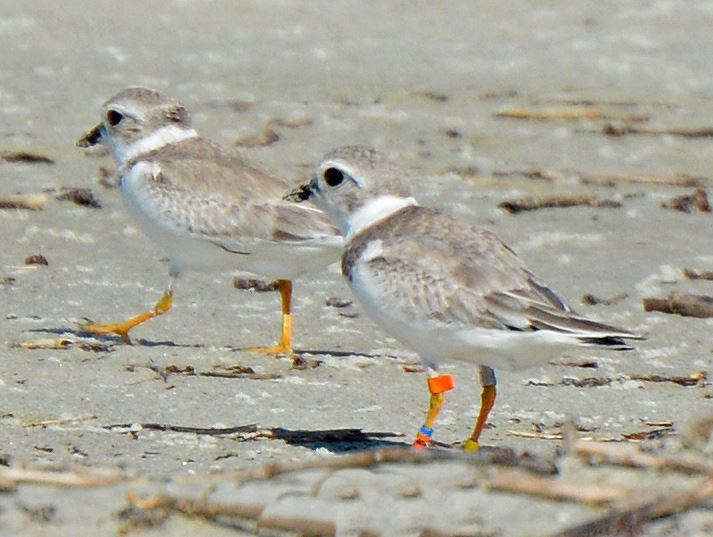 Of,B/OO:X,Y spotted on Cumberland Island by Pat Leary