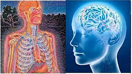 Pain Management Specialists - Nervous system disorders