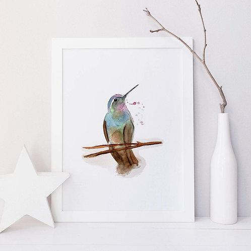Affiche colibri