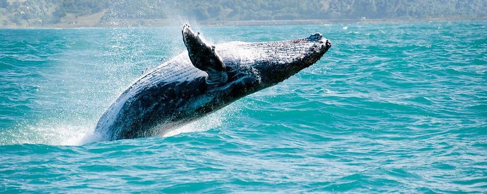 mexico viajes | ballena gris