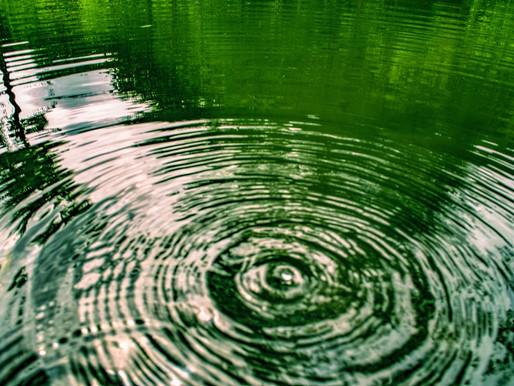 A Cons-ciência das águas