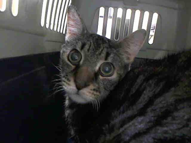 Old Man Sam (FKA Nana A0738733)
