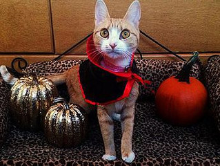 A CAT SAFE HALLOWEEN IS A HAPPY HALLOWEEN