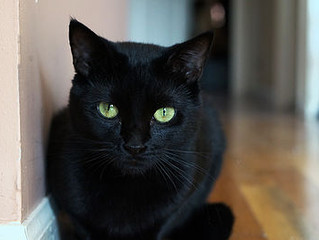 Black Cats: Wicked or Wonderful?