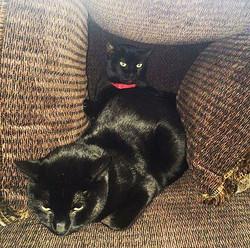 Meow Meow (FKA A1057891) (2)