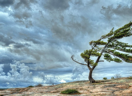 Trauma within, Trauma without….how the current UK climate is affecting our patients and us?