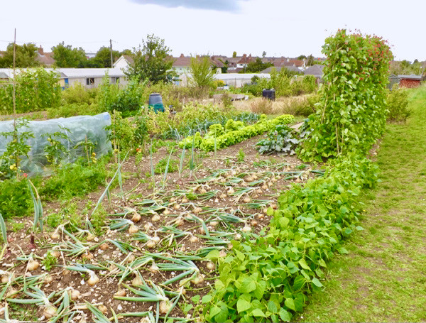 allotments_16.jpg