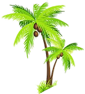 palm- ree.png