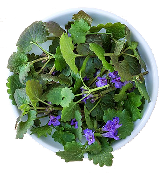 herbs-2437091_1920.png