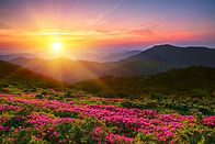 wonderful mountains Ukrainian sunrise  landscape with blooming rhododendron flowers, summ